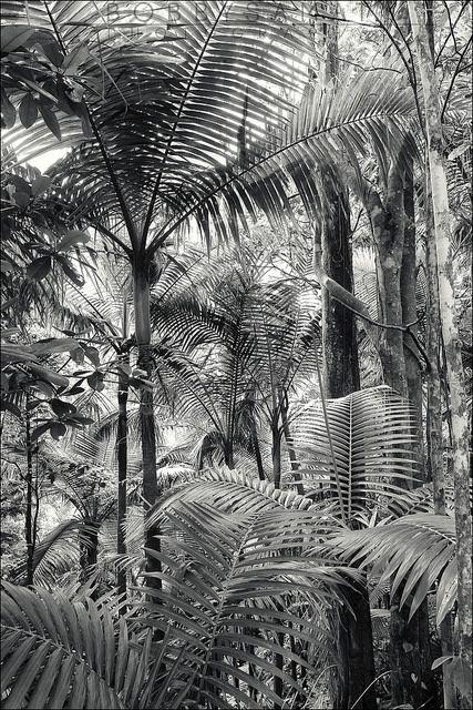 Puerto Rican Rain Forest / Jungle - such a unique place