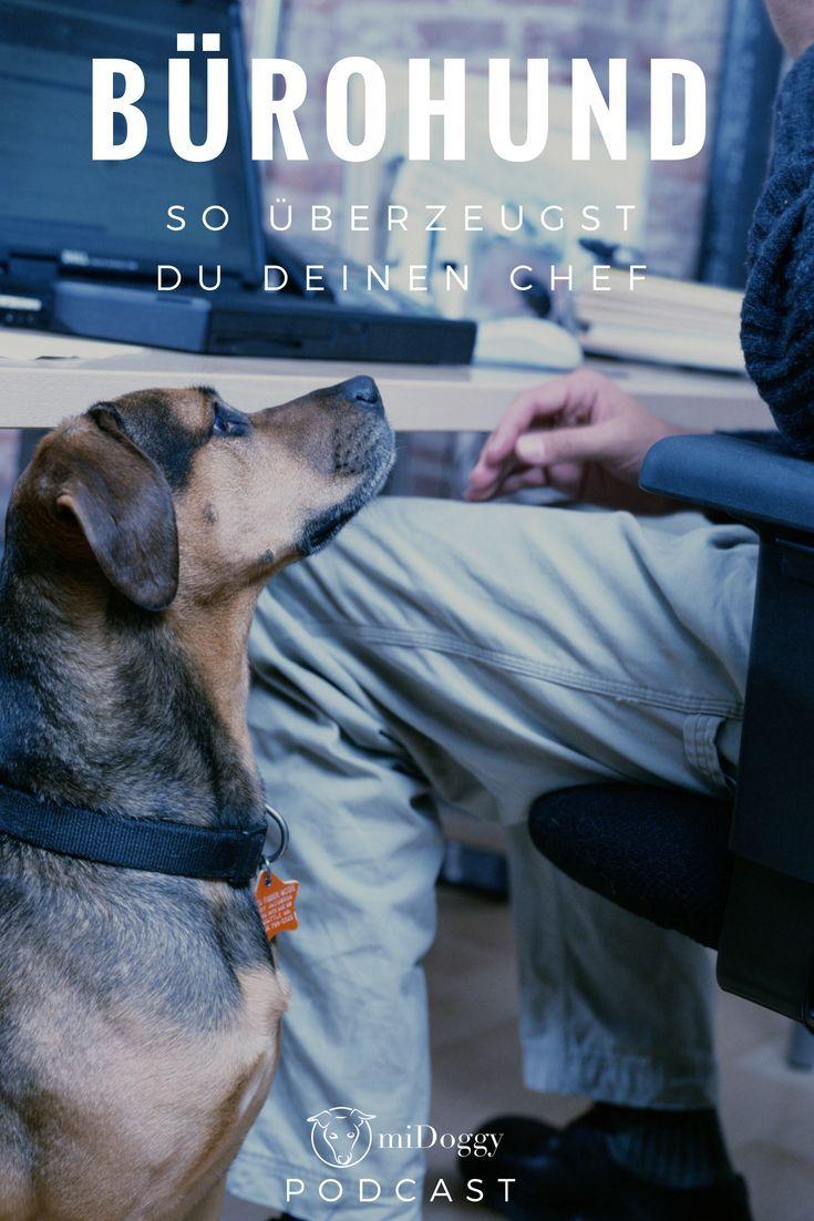 Der Midoggy Podcast Hund Im Buro Hundeerziehung Hunde
