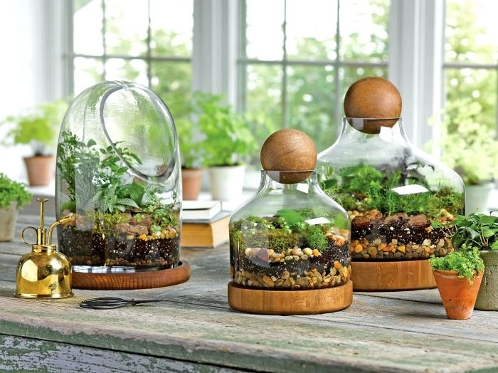 1001 mod les de terrarium plante en bocal ferm ou. Black Bedroom Furniture Sets. Home Design Ideas
