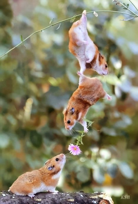 Best Pets Images On Pinterest Hamster Stuff Cool Hamster - Hamster bartenders cutest thing youve ever seen
