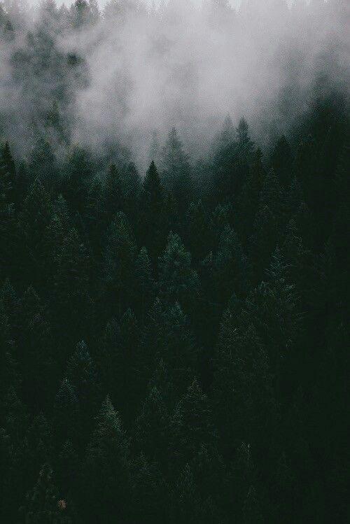 Forbidden Forest   Slytherin aesthetic, Dark green ...