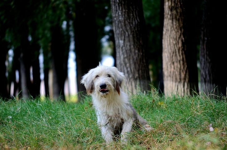 Forest dog by Stoian Marius on 500px