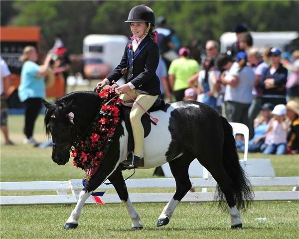 Conform definiţiei curente, poneiul este un cal de talie mică, cu o conformaţie şi un temperament particular. Spre deosebire de cai, poneii prezintă o coamă deasă, o coadă şi un păr aspre, picioare proporţional mai scurte, un corp mai lat, osatură mai robustă, un gât gros şi o frunte mai lată. Pentru a facilita competiţiile oficiale, Federaţia Internaţională de Echitaţie defineşte poneiul ca fiind orice cal care măsoară mai puţin de 1,48 cm, de la nivelul greabănului. www.horseland.ro