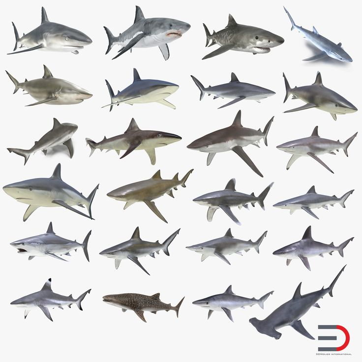 3D Sharks Collection
