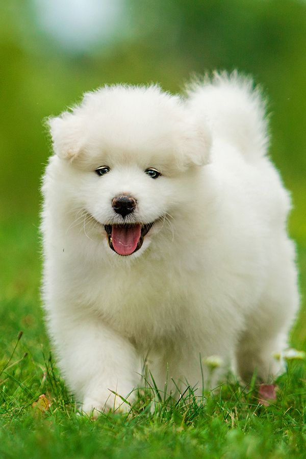 10 Cutest Dogs and Puppies to Bring Your Mood Up   – Animals