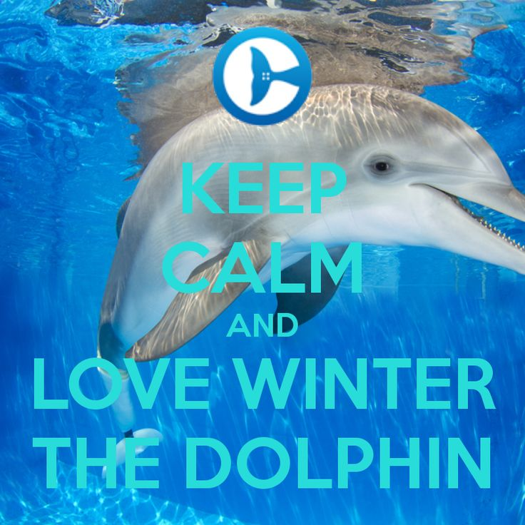 winter and hope the dolphins | KEEP CALM AND LOVE WINTER THE DOLPHIN