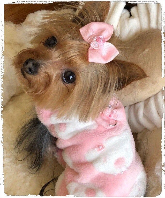 Girly Girl Dog Coat Xs S M Coat For Pets Jacket For Dogs