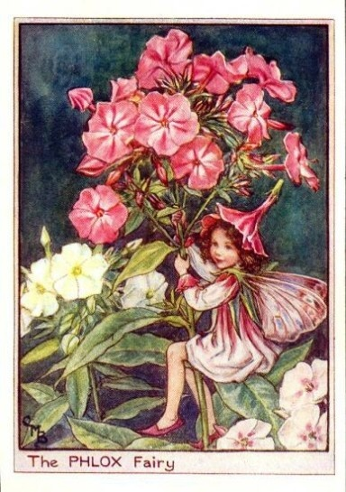 Phlox Flower Fairy, Fairies Print by Cicely Barker. http://www.flowerfairyprints.com