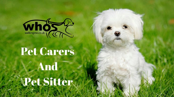 Before we begin taking care of your #pets , we want to have a meet and greet!   Find out how it works on our website.   #PetCaretaker #pets #petdogs #dogwalking  #doglovers #doggies