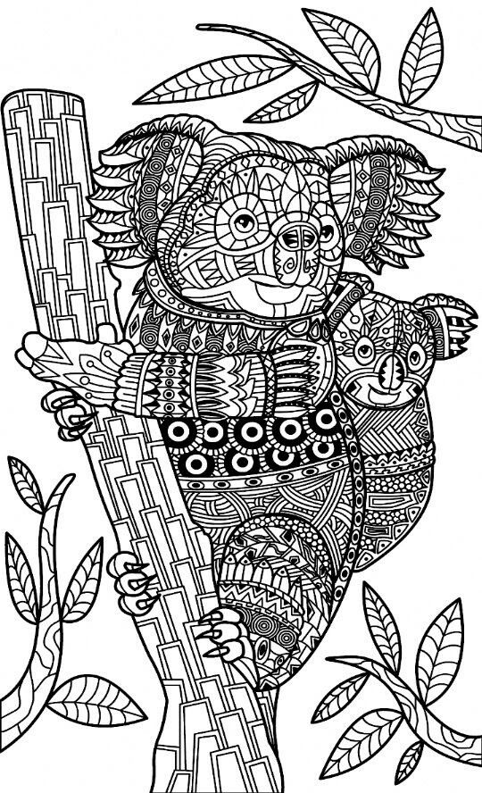 Koalas Zentangle Coloring Page Adult Coloring Animals
