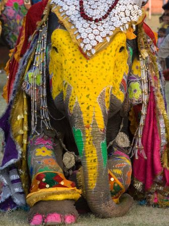 Elephant with India's Colors. Look at her painted toenails.