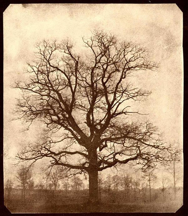 """""""Oak Tree in Winter at Lacock Abbey""""  Salt print from a calotype negative, early 1840s. 19.5 x 16.6 cm.  From the negative in the FTM, LA3065. Schaaf 1981"""