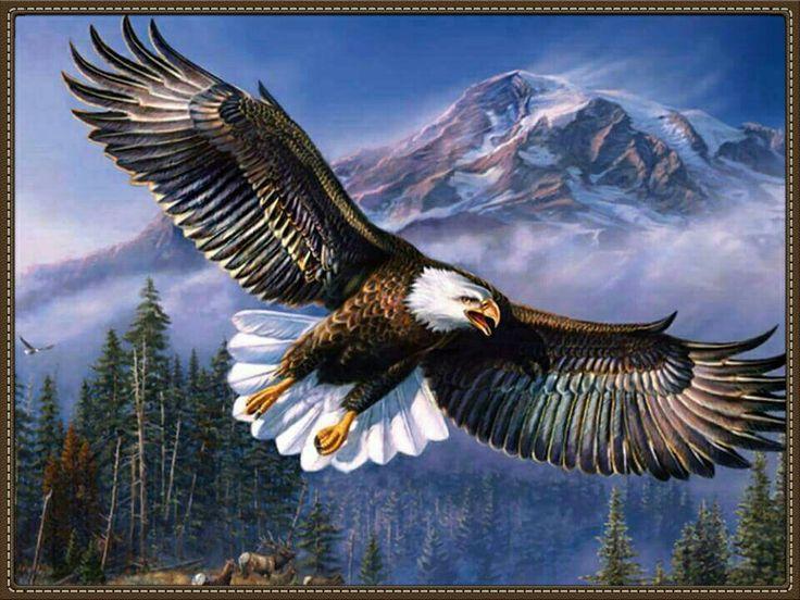 O vôo da águia.