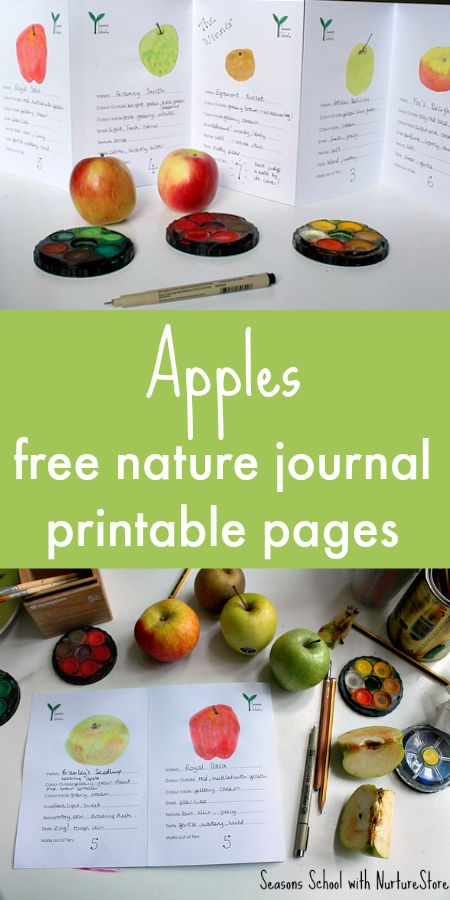 free printable apple taste test sheet and ideas for how to use this apple printable to make a zigzag book for your apple lapbook or nature journal. Great for an autumn apple unit.