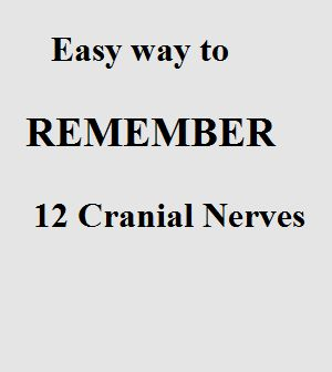 Easy Way To Learn Cranial Nerves - Anatomy Organ System