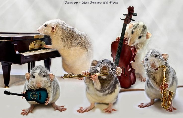 Mouse musiciansFunny Tricks, Vans, Amazing Pictures, Music Instruments, Jazz Band, Rats Pack, The Band, Animal, Music Band