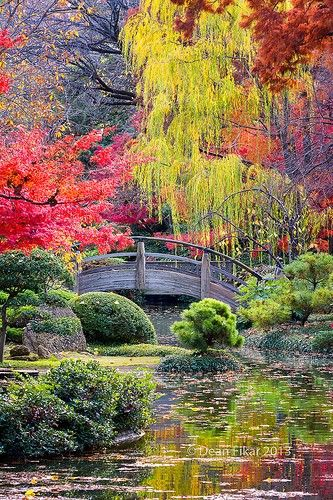Gardening Autumn - Moon Bridge in the Japanese Gardens, Fort Worth Botanical Gardens, Texas - With the arrival of rains and falling temperatures autumn is a perfect opportunity to make new plantations