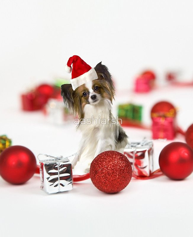 Cute #Papillon #Dog #Christmas Santa #Hat #MerryChristmas #iPadcases