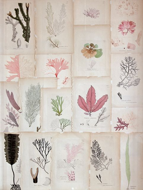 Would love this in my office :: coral botanical prints | #vintage prints #collections