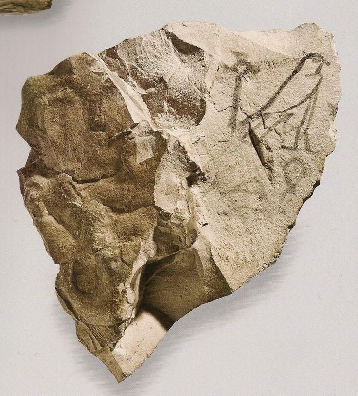 Otracon figuré biface : animaux et épithète divine. 19e-20e dyn - 1295-1069 av JC. L'art du contour - Le dessin dans l'Égypte ancienne.