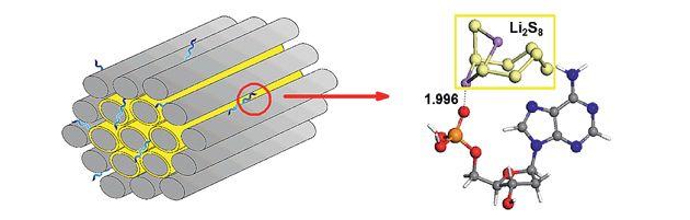 Las baterías de litio-azufre (Li-S) son más baratas, medioambientalmente mejores y ya son capaces de proporcionar hasta tres veces la densidad de energía de la mayoría de las celdas de Li-ion. Lo único que impide su comercialización inmediata es su inestabilidad, un problema que un grupo de investigadores de la Universidad China de Geociencias encabezado por Qiyang Li ha solucionado funcionalizando los electrodos con ADN.