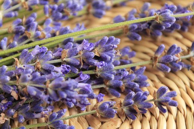 Levandulová mast, levandulový olej | DIY. Levandule je úžasná bylinka s mnohostranným využitím. Pomáhá nám nejen svou uklidňující