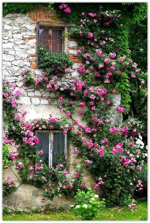 Rambling-rose-covered stone cottage with casement windows.