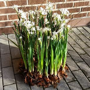 blomsterarrangemang påsk utomhus - Sök på Google