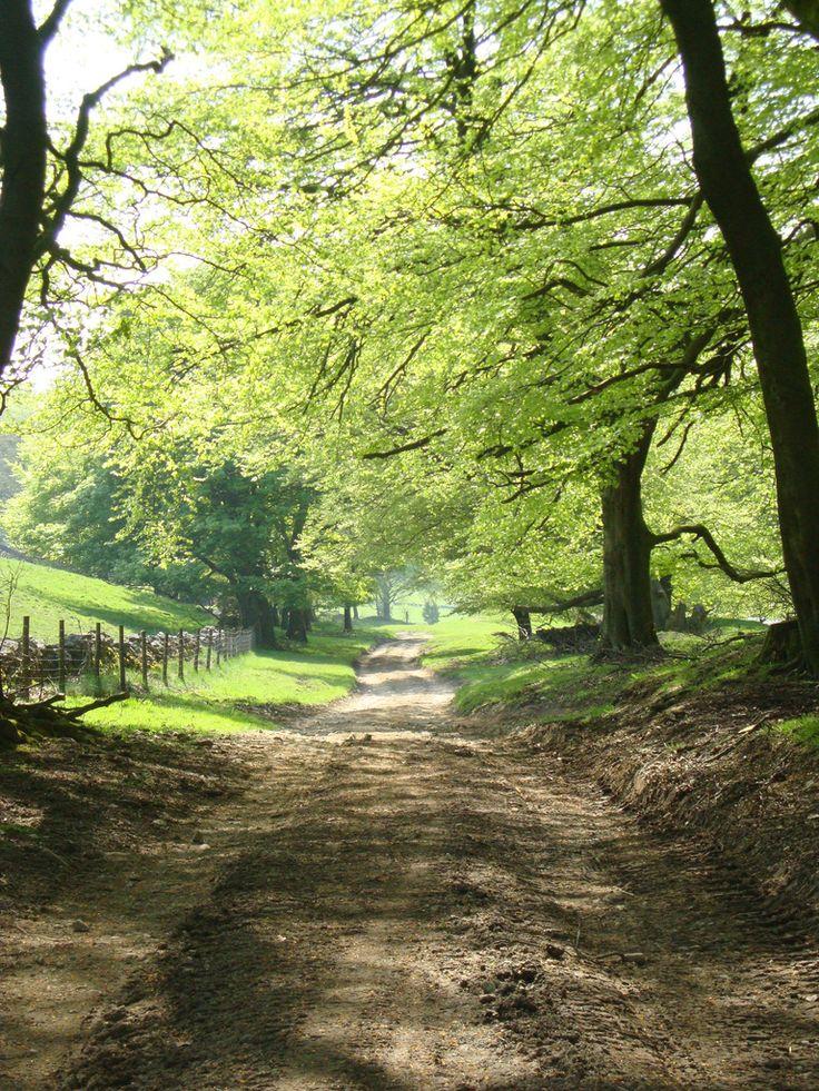 An English country lane