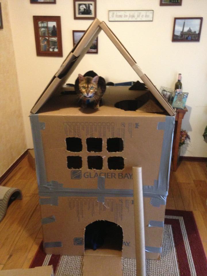 9 best Cardboard Cat House DIY images on Pinterest   Cat houses ...