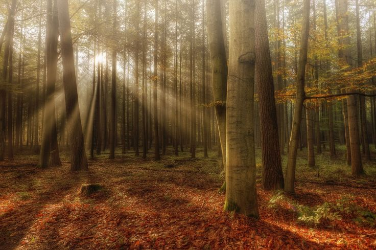 Photograph autumn forest by Anke Kneifel on 500px