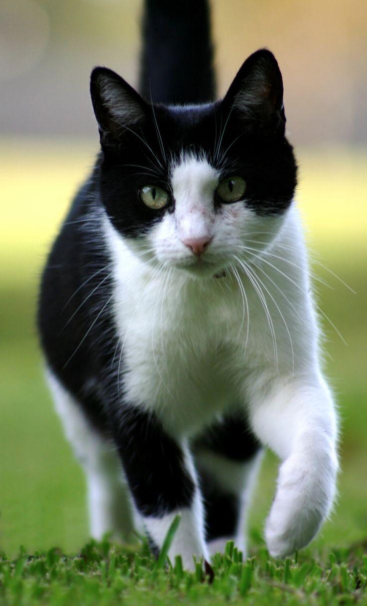 Katze Schwarz weiß                                                                                                                                                                                 More