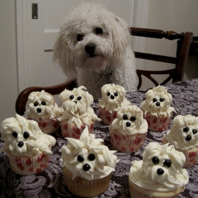 'pupcakes' instead of cupcakes, it just made me laugh!
