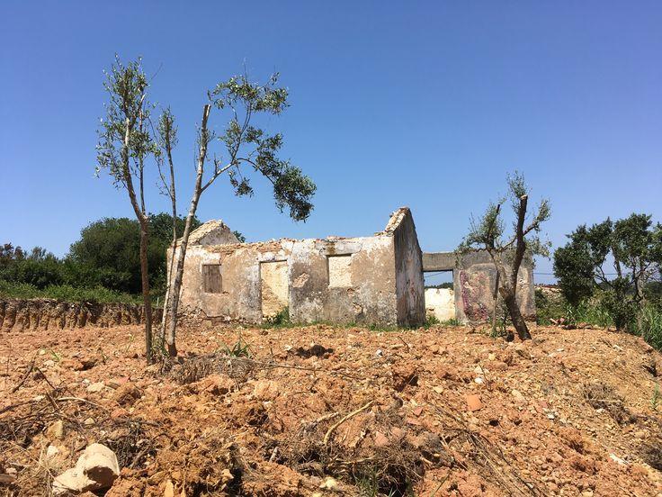 Terreno de 1000m2 c/ ruína de 170 m2 - a 3 min. da praia da Foz do Arelho  Localizado na Serra do Bouro, em zona de envolvência de campo, muito sossegada e perto das praias da Foz do Arelho e São Martinho do Porto.
