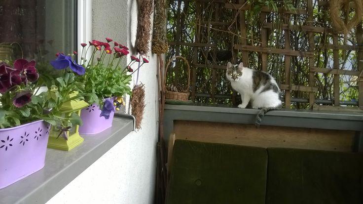 Balkon, kwiaty i Burek