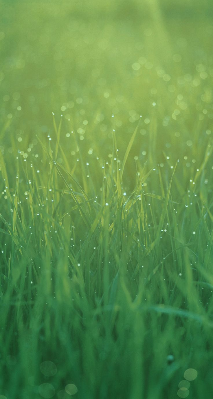 Wallpaper iphone green - Find This Pin And More On Iphone Ipad Green Wallpapers By 4countrysisters