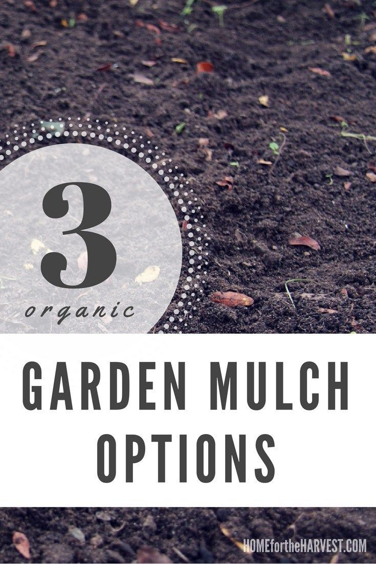 These organic mulches will keep your garden looking great while also keeping weeds down and retaining moisture | Home for the Harvest #mulch #gardenmulch #mulching #organicmulch #organicgardening #barkmulch #compost #woodchips #permaculture