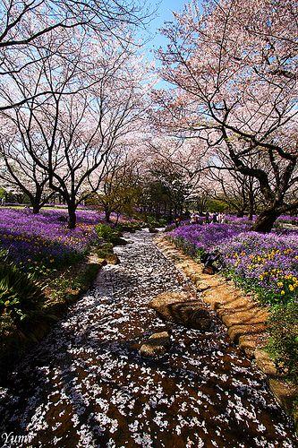 春の小川 ~spring brook~
