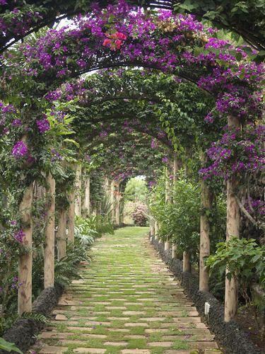 Jardines bonitos con flores y plantas