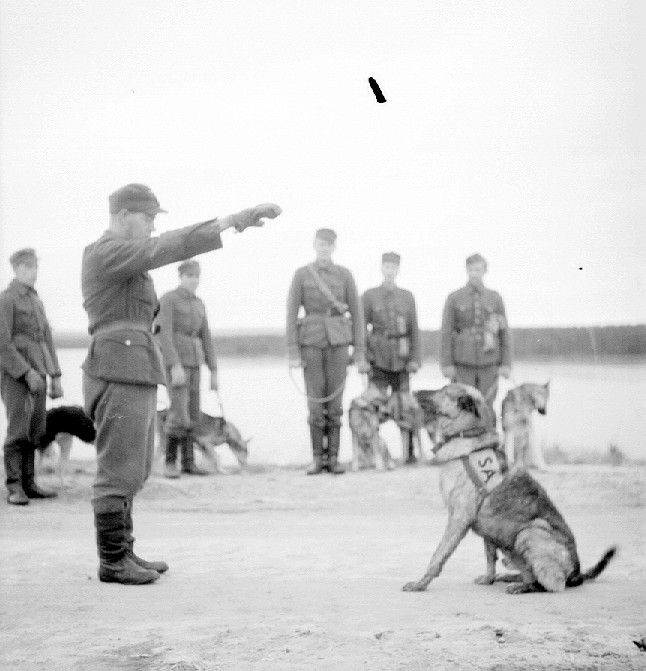 Finnish soldiers training dogs. Pin by Paolo Marzioli