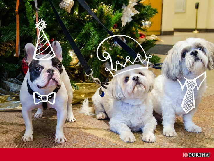 Notice some new faces at your office holiday party? Make the most of the holidays with pets at work!