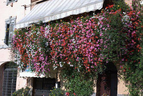 Így rendezzük be az erkélyt tavasszal! Megérkezett a tavasz ideje megtervezni az erkély berendezését és virágait. Még a legkisebb erkélyt is valódi oázissá varázsolhatjuk, néhány ügyes praktika segítségével. http://noinetcafe.hu/index.php/noevenyek/kerteszkedjuenk/2782-igy-rendezzuek-be-az-erkelyt-tavasszal