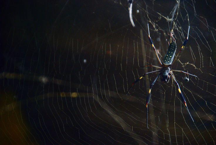 ~Spider on its web by Luis Alejandro Bernal Romero / aztlek.com ~