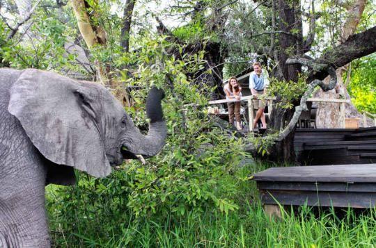 "Elephant says ""Hi!"" at Abu Camp (Okavango Delta, Botswana). Wanna visit that fantastic place? Just let us know: info@gondwanatoursandsafaris.com"