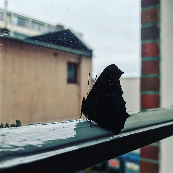 some color in our soul... some sugar in my bowl...  #autumn #picoftheday #mood #butterfly #window #tristeza #tristesse #melancholy #hamburg #wetter #instagood