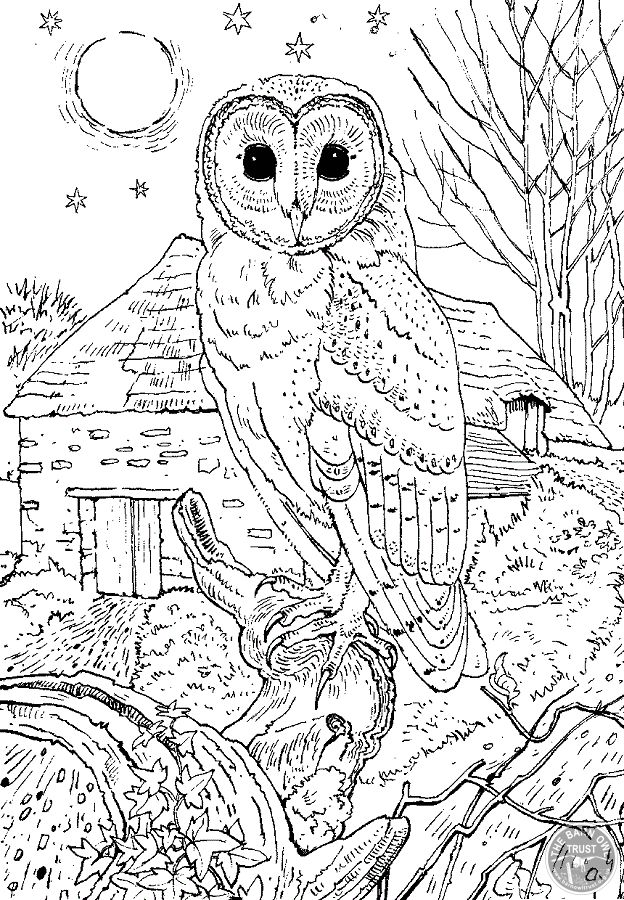 Simplicity image in printable owl coloring pages for adults