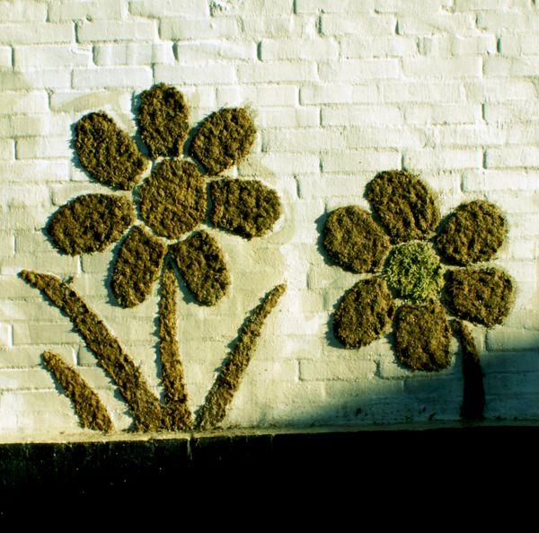 Moss graffiti on Behance