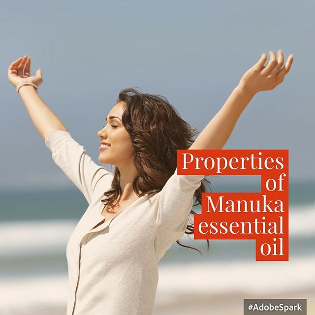 Manuka essential oil is one of the more recent entries into the aromatherapy collection but native New Zealanders have been aware of its extraordinary health benefits for centuries. The Maoris have long used various parts of the manuka tree to deal with a range of health complaints making use of its oil, sap, bark and leaves because of its remarkable antibacterial qualities. Visit https://theclassicthreads.sg/product/manuka-oil-mbtk-25-10ml/ for more information about Manuka Oil.  #Manuka