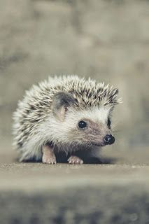 """The hedgehog teaches us to explore and follow our natural curiosity, but it…"