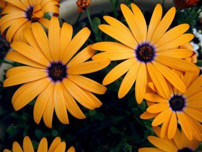 Flores de jardín para cortar